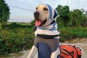 Chú chó Củ Cải 'gây bão' mạng với màn nhớ tên đội bóng, làm toán