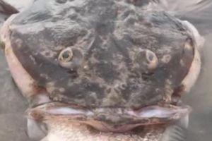 Cá quái vật 18 năm tuổi chết dạt bờ vì mắc nghẹn