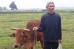 Chăn trâu, bò phải đóng phí đồng cỏ: Giải thích nhiều chiều