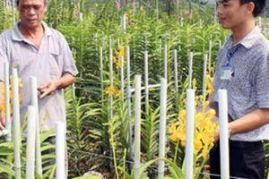 Xây dựng nông thôn mới ở Củ Chi: Còn nhiều trở lực với phát triển sản xuất