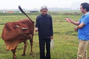 Chăn thả trâu, bò phải đóng phí: Vụ việc không thể chấp nhận được