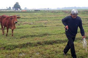 'Chuyện lạ đời' ở Thanh Hóa: Người dân phải đóng phí chăn thả trâu, bò