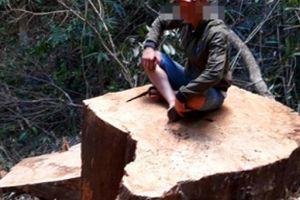 Vụ phá rừng ở Gia Lai: Kỷ luật Hạt trưởng và 2 kiểm lâm địa bàn