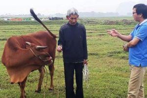 Tin mới: Thanh Hóa yêu cầu trả lại tiền thu phí trâu bò trước 30.4