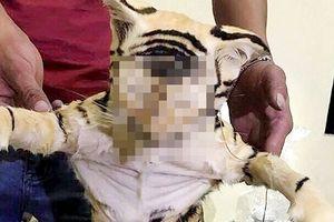 Phát hiện 2 con hổ ngâm rượu trên xe khách
