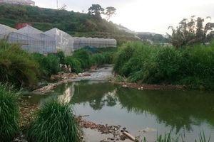Dùng điện chích cá trên suối Cam Ly, 2 người thiệt mạng
