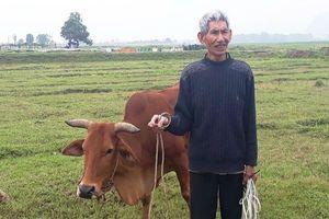 Vụ thu phí trâu bò ở Thanh Hóa: Sẽ xin lỗi dân và trả lại tiền