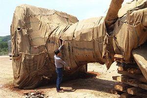 Ba cây khủng xuyên Việt: Không phát hiện được vì lực lượng quá mỏng?