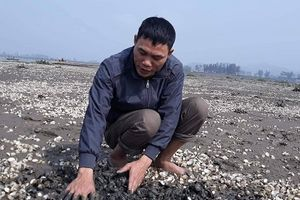Thanh Hóa: 90 tấn ngao chết trắng bãi, nông dân thiệt hại hàng tỷ đồng