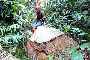 Gia Lai: Ba cán bộ kiểm lâm bị kỷ luật vì để mất rừng