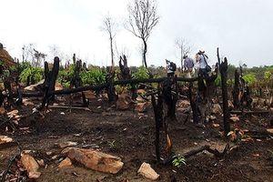 Cháy rừng nghi do đốt cây khai hoang ở Phú Quốc