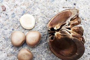 Nhóm học sinh ăn nhầm quả ngô đồng phải nhập viện cấp cứu