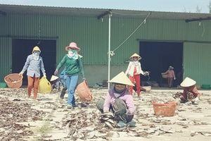 Ngư dân Quảng Nam trúng tiền tỷ từ chuyến ra khơi câu mực đầu năm