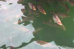 Đang lấy mẫu xác định nguyên nhân cá nuôi bè nổi bị chết ở Kỳ Anh- Hà Tĩnh