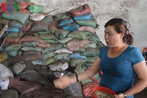 Bộ Nông nghiệp vào cuộc làm rõ vụ chế phẩm cà phê nhuộm than pin