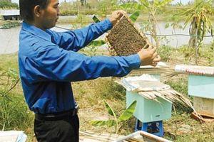 Nuôi ong bằng thùng xốp, chưa đến 50.000 đồng/ tổ, mật thu đều đều