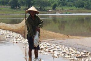 Hé lộ nguyên nhân cá chết hàng loạt ở Bình Phước