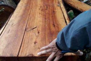 Tận thấy rừng phòng hộ Kvàng ở Quảng Bình bị phá tan hoang