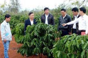 'Siêu' nông dân cà phê sắm 5 ôtô, xây biệt thự nhờ vốn vay Agribank