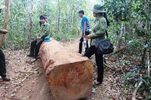 40 đối tượng đe dọa lực lượng chức năng, cướp tang vật nghi liên quan phá rừng