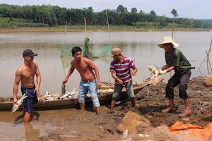 Hàng chục tấn cá chết trắng đập chưa rõ nguyên nhân