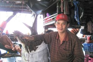 Ngư dân Bình Định trúng đậm mực xà