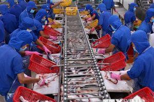 Cần cẩn trọng khi mở rộng diện tích nuôi cá tra ở ĐBSCL