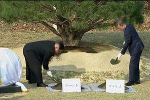 Lãnh đạo liên Triều thực hiện nghi lễ trồng cây, dạo bộ vùng DMZ