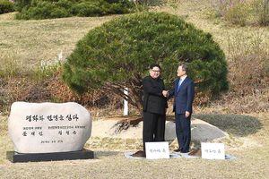Ẩn ý sâu xa đằng sau lễ trồng cây thông của lãnh đạo Hàn - Triều