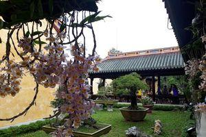 Mê mẩn ngắm phong lan ba miền hội tụ tại vườn ngự uyển kinh thành Huế