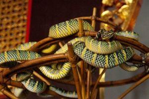 Rợn người với ngôi đền rắn bò lổm ngổm ngay trên đầu du khách