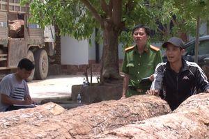 Phá án vụ khai thác gỗ rừng đặc dụng vườn quốc gia Yok Đôn trái phép