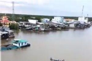 Cà Mau: Phát hiện cá heo khoảng 200 kg nổi trên sông Bảy Háp