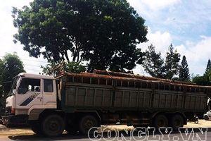 Bộ Công an triệt phá đường dây gỗ lậu của trùm gỗ Phượng 'râu'