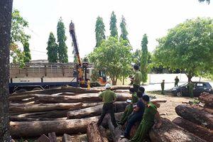 Bộ Công an phát hiện, bắt giữ vụ gỗ lậu 'khủng' tại Đăk Nông