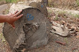 Vụ bắt xe gỗ lậu ở Đắk Nông: Báo cáo từ Vườn Quốc gia Yok Đôn
