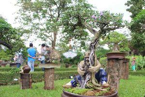 Cây kiểng và phong lan khắp 3 miền hội tụ tại Huế