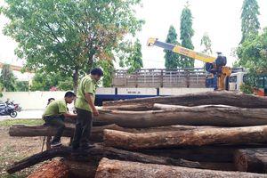 Bắt khẩn cấp trùm gỗ lậu Phượng 'râu'