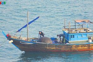 Đà Nẵng xử lý nghiêm tình trạng đánh bắt cá bằng thuốc nổ