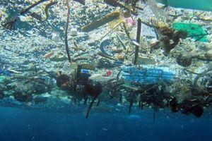 Với 18.000 tấn mỗi ngày, đến năm 2050 thức ăn của cá sẽ là nhựa?
