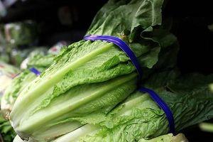 Mỹ bùng phát dịch do khuẩn E.coli từ rau xà lách khiến 98 người ngộ độc