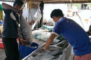 Cá thu rớt giá