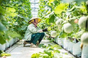 Thăm nông trang 'khổng lồ' VinEco