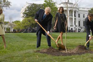 Hé lộ tung tích cây sồi Tổng thống Trump và ông Macron trồng tại Nhà Trắng sau khi biến mất bí ẩn