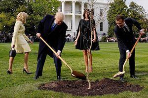 Lý do cây sồi Tổng thống Pháp trồng tại Nhà Trắng bỗng nhiên 'mất tích'