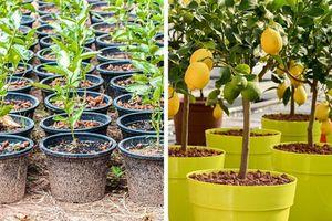 Ăn những loại quả này phải giữ ngay lại hạt để trồng cây