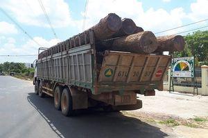 Bắt trùm gỗ lậu Phượng 'râu': Đình chỉ 4 cán bộ đồn biên phòng