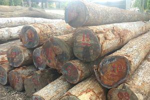 Vụ 'trùm' gỗ Phượng 'râu': Đình chỉ công tác 4 cán bộ đồn Biên phòng