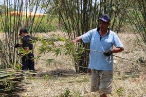 Vùng đất khan hiếm trúc và con gái 13, 14 tuổi đã ham đan mê bồ