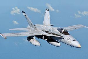 Không chỉ Nga, chiến đấu cơ Mỹ cũng 'rụng như sung' vì chim trời